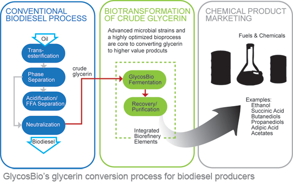 production of propylene glycol from glycerol biology essay Glycerol is a byproduct obtained during the production of biodiesel as the biodiesel production is increasing quickly, the petroleum glycerin generated from the.